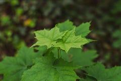 Feuilles de vert avec la marche de fourmis photographie stock