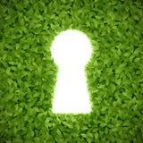 Feuilles de vert avec le trou de la serrure Photographie stock