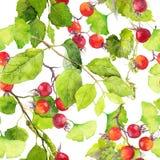Feuilles de vert, baies rouges Configuration sans joint watercolor illustration de vecteur