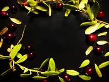 feuilles de vert d'airelle rouge images libres de droits