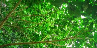 Feuilles de vert d'arbre photos stock