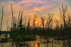 Feuilles de vert d'arbre de palétuvier et d'arbre mort dans la forêt i de palétuvier images libres de droits