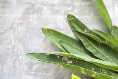 Feuilles de vert de dommages sur le mur de ciment Photographie stock libre de droits