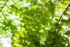 Feuilles de vert de feuillage Photos stock