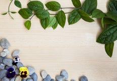 Feuilles de vert de fond sur le bois photos libres de droits