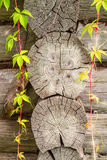 Feuilles de vert de liseron sur le cadre en bois de fond de texture Photos stock