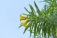Feuilles de vert et fleur jaune sur un fond bleu-clair Photo libre de droits