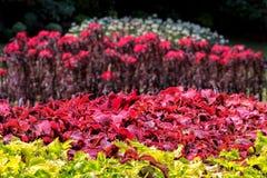 Feuilles de vert et fleurs exotiques rouges luxuriantes dans une forêt tropicale Photo libre de droits