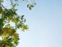Feuilles de vert et fleurs jaunes Photos libres de droits