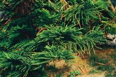 Feuilles de vert, fond de ressort Photos libres de droits