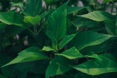 Feuilles de vert, fond de ressort Photographie stock