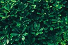 Feuilles de vert, fond de ressort Photo libre de droits