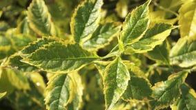 feuilles de vert jaune Images stock