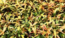 Feuilles de vert ou nature d'été Image stock