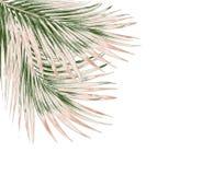 Feuilles de vert de palmier d'isolement sur le fond blanc Photo libre de droits