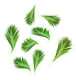 Feuilles de vert de palmier d'isolement sur le fond blanc photographie stock