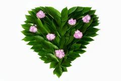 Feuilles de vert sous forme de coeur Décoré des fleurs roses Photographie stock libre de droits