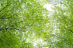 Feuilles de vert sous le ciel lumineux Photo stock