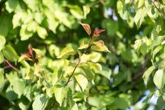 Feuilles de vert sur l'arbre en nature Images stock
