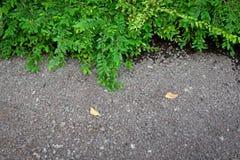 Feuilles de vert sur le fond concret Image libre de droits