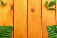 Feuilles de vert sur le fond en bois de table Vue supérieure Photos stock