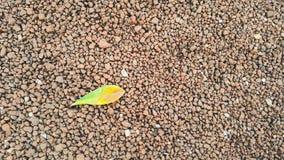Feuilles de vert sur le petit plancher en pierre Photos stock