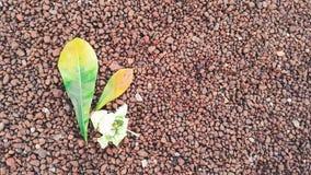 Feuilles de vert sur le petit plancher en pierre Image libre de droits