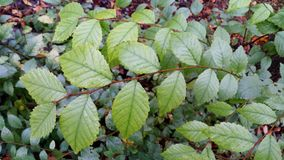 Feuilles de vert sur les milieux verts Image stock