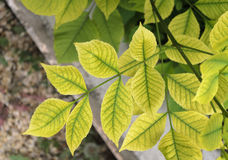 Feuilles de vert sur une branche de buisson Images stock
