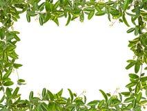 Feuilles de vigne avec le petit cadre de fleur Photographie stock libre de droits