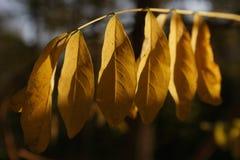feuilles del automne d Fotografia Stock Libera da Diritti