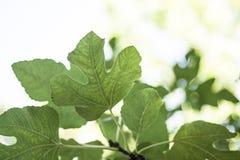 Feuilles des arbres dans le bosquet de la for?t photo stock
