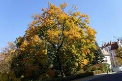 Feuilles des arbres en automne jaune image libre de droits