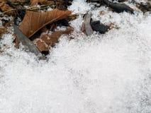 Feuilles des arbres sous la neige image libre de droits