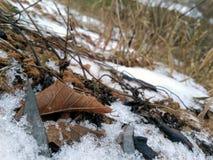 Feuilles des arbres sous la neige image stock