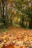 Feuilles des arbres sur la route en automne photos stock
