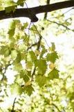 Feuilles des arbres un jour lumineux d'été image stock