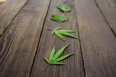 Feuilles des cannabis sur la surface en bois foncée Plan rapproché Images libres de droits