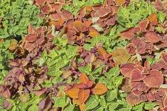 Feuilles des fleurs de diverses couleurs tout près photographie stock
