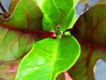 feuilles des usines deux couleurs images stock