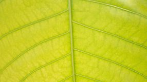 Feuilles des feuilles vert clair Image stock