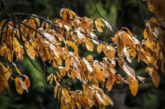 Feuilles Photos stock