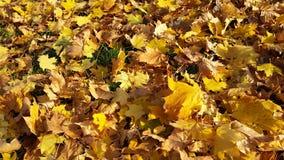 Feuilles en automne Photo libre de droits