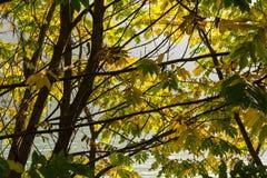 Feuilles en automne Photographie stock libre de droits