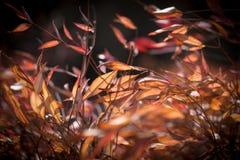 Feuilles en automne Photos libres de droits