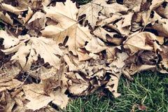 Feuilles en automne Images stock