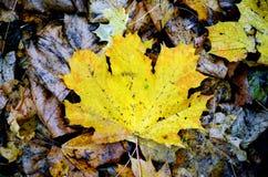 Feuilles en automne Images libres de droits
