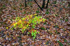 Feuilles en automne Photo stock