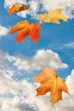 Feuilles en baisse d'érable abstrait jaune rouge d'automne sur le nuage bleu SK Photographie stock