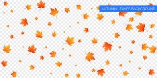 Feuilles en baisse d'automne sur le fond transparent Chute automnale de feuillage de vecteur des feuilles d'érable Conception de  Photographie stock